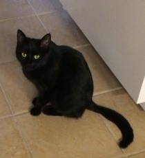 foundblackcat