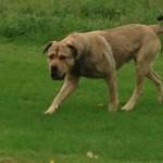 founddog
