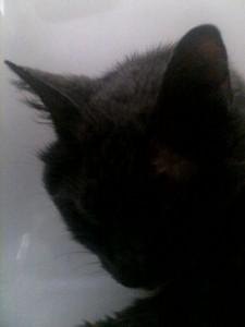 foundgreycat